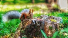 伟大的绿色自然和litlle灰鼠 免版税库存照片