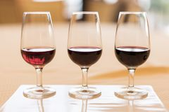 伟大的葡萄酒红葡萄酒葡萄酒葡萄酒酿造学品尝  免版税库存图片