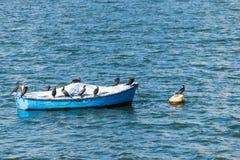 伟大的鸬鹚鸟的小组在一条小船的在Draycote浇灌湖,英国 库存图片
