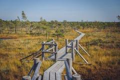伟大的Kemeri沼泽木板走道, Kemeri国家公园,拉脱维亚 免版税库存图片
