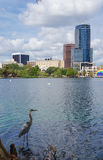 伟大蓝色的苍鹭的巢、摩天大楼和圆形剧场,湖的Eola 免版税图库摄影