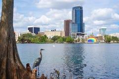 伟大蓝色的苍鹭的巢、摩天大楼和圆形剧场,湖的Eola 图库摄影
