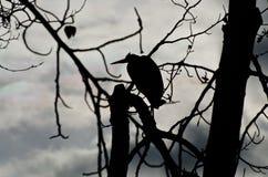伟大蓝色的苍鹭的巢剪影  免版税库存图片