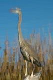 伟大蓝色的苍鹭的巢反射 库存照片