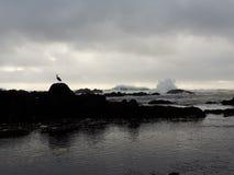 伟大蓝色的苍鹭的巢和波浪 免版税图库摄影