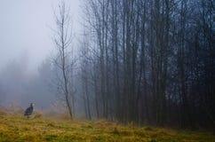 伟大蓝色的苍鹭的巢在一个有雾的早晨 库存图片