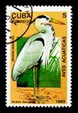伟大蓝色的苍鹭的巢(Ardea herodias),国际邮票Exhibitio 库存照片