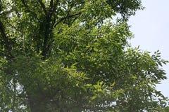 传播的叶子在阳光下 免版税库存图片