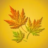 传染媒介与保险开关纸槭树的秋天背景离开 库存照片