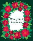传染媒介圣诞节贺卡一品红花 向量例证