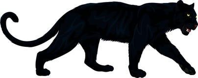 传染媒介在白色的黑豹例证 免版税图库摄影
