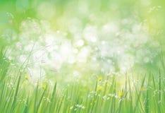 传染媒介夏天,绿色,自然背景
