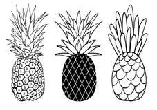 传染媒介套三个菠萝果子样式夏天热带对象收藏 伟大为旅行,党邀请或 免版税库存图片