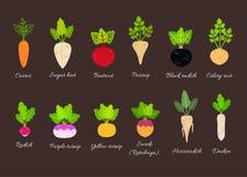 传染媒介套不同的根菜类 皇族释放例证