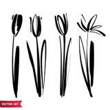 传染媒介套墨水图画郁金香开花,单色艺术性的植物的例证,被隔绝的花卉元素,手 向量例证