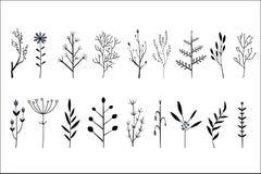 传染媒介套手拉的装饰草本和花 不同的植物的小枝杈 植物的象 免版税库存图片