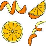 传染媒介套柑橘我 向量例证
