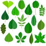 传染媒介套树叶子 向量例证