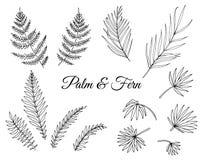传染媒介套热带蕨和棕榈叶 库存例证