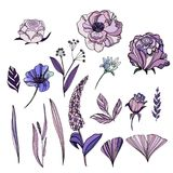 传染媒介套逗人喜爱的手拉的花 玫瑰,紫罗兰, Ranunculu 免版税库存图片