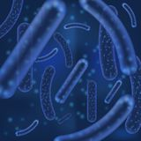 传染媒介微细菌或病毒有机体 微观乳酸杆菌属或嗜酸性有机体摘要背景与 向量例证