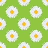 传染媒介戴西春黄菊花无缝的样式 伟大为促进,婚礼,网络 动画片平的样式 库存图片