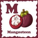 传染媒介教育的果子字母表 孩子的例证 山竹果树的信件M 库存例证