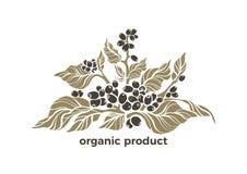 传染媒介有机标志 健康产品 咖啡树 库存例证