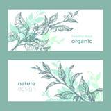 传染媒介有机模板 自然绿茶 草本食物 库存例证