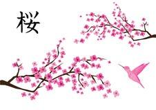 传染媒介有桃红色蜂鸟的樱花 皇族释放例证