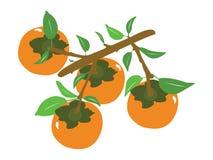 传染媒介果子蜜桔或橙色分支,摘要 向量例证