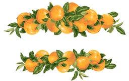 传染媒介标题装饰elementwith葡萄柚在现实图形设计例证的柑橘分支 库存例证