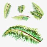 传染媒介树棕榈 免版税图库摄影