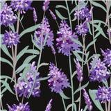 传染媒介样式用淡紫色 手绘画 织品的,包裹纸的印刷品,黑背景无缝的纹理 免版税库存照片