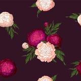 传染媒介牡丹 浅粉红色和伯根地花的无缝的样式 在伯根地背景的花束 E 向量例证