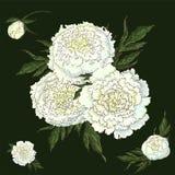 传染媒介牡丹 设置被隔绝的白花 在深绿背景的花束 花卉装饰的模板, 库存例证