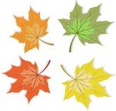 传染媒介秋天被设置的槭树叶子 库存例证