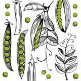 传染媒介背景用手拉的豌豆 库存照片