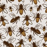 传染媒介蜂蜜蜂无缝的样式或背景 库存例证