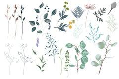 传染媒介设计师绿色森林蕨,热带绿色玉树绿叶艺术叶子自然叶子草本的元素集汇集 库存例证