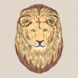 传染媒介一头严肃的狮子的特写镜头画象 免版税库存照片
