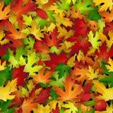 传染媒介与五颜六色的秋叶的背景设计,无缝的样式 免版税库存图片