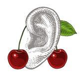 在耳朵的樱桃在葡萄酒板刻样式 免版税库存照片