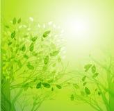 抽象春天树背景 免版税图库摄影