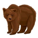 传染媒介例证棕熊 免版税库存照片