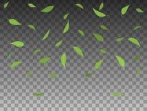 传染媒介例证集合绿色树叶子落 免版税库存图片