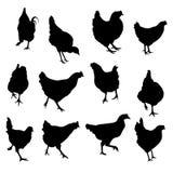 传染媒介剪影鸡和roosterset 免版税库存图片