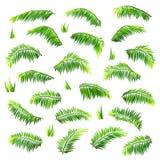 传染媒介在白色上色了棕榈叶被设置 免版税库存照片