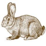 传染媒介在白色背景的板刻兔子 免版税图库摄影