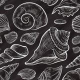 传染媒介贝壳无缝的样式 黑板样式 图库摄影